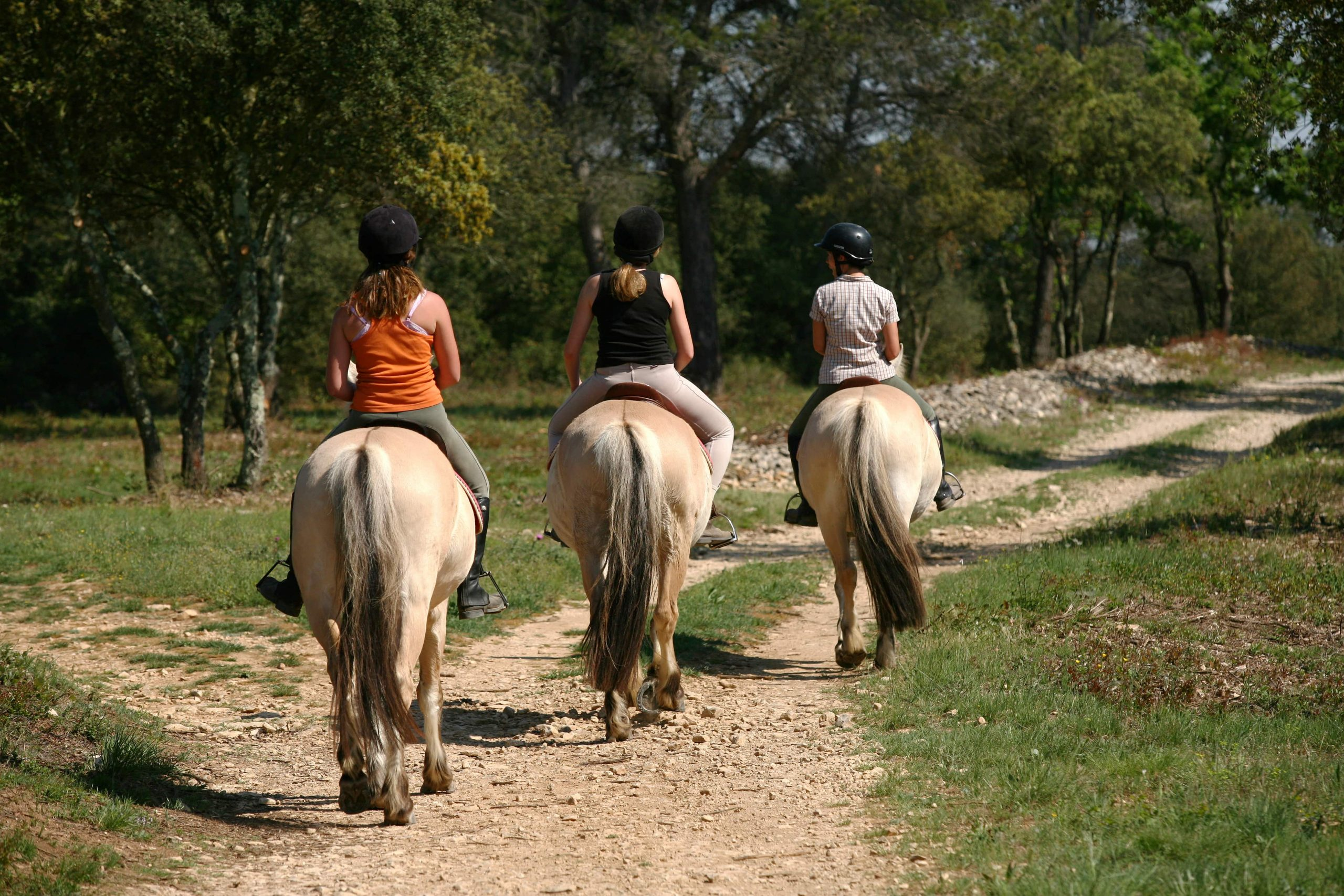 Groupe de personne effectuant une randonnée à cheval